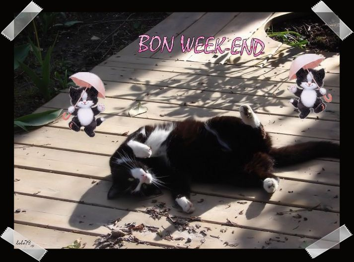 Mes creations chats page 15 - Bon week end a tous ...