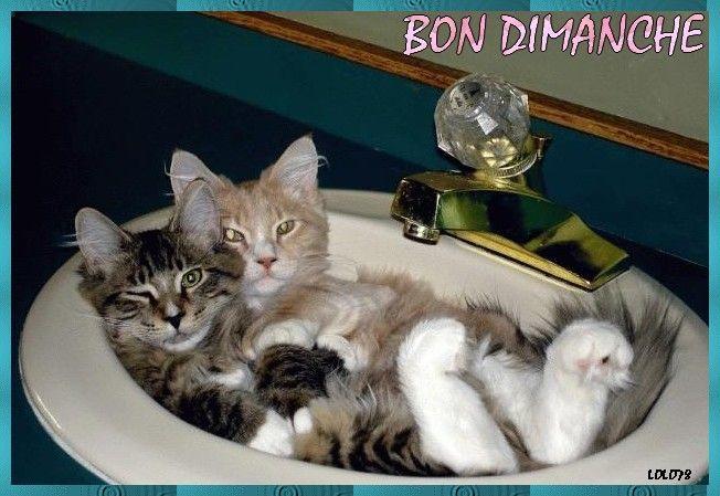 """Résultat de recherche d'images pour """"dimanche humour chat"""""""